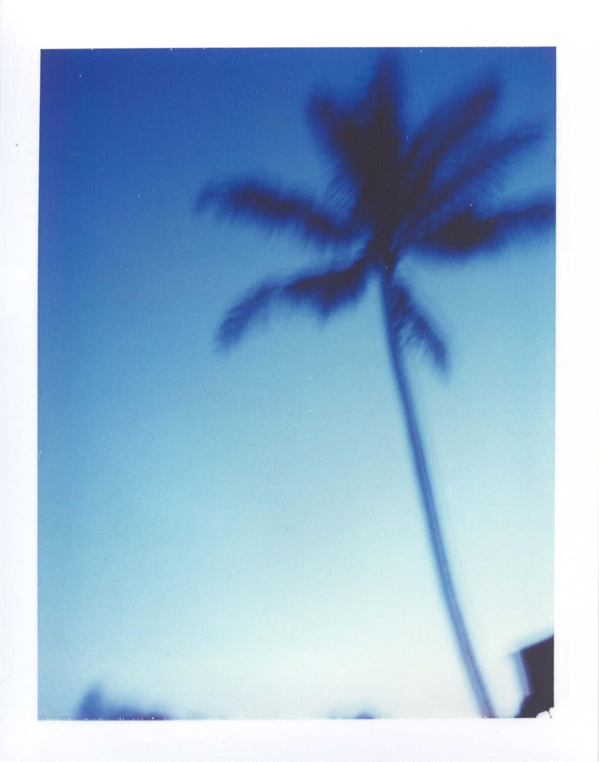 palm+vert1